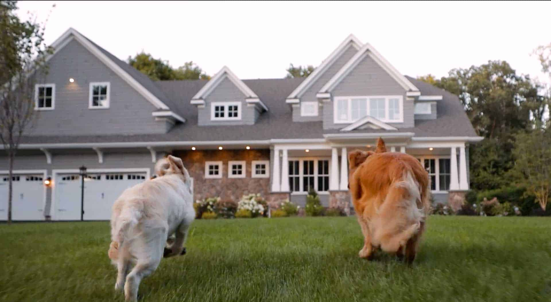 dogs running towards a house