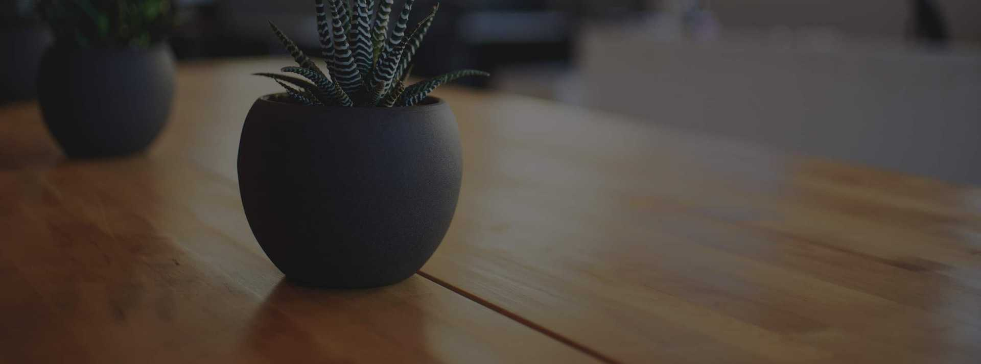 Small succulent plant in pot on wood desk