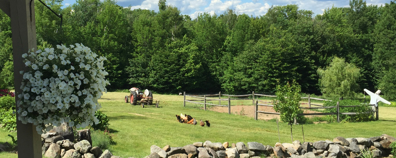 Equestrian & Country Properties for Sale - Equine Homes Real